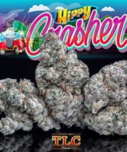 buy jungle boys hippy crasher, buy Jungle Boys Hippy Crasher online, buy jungle boys online, buy weed packs online, hippie crasher, hippie crasher strain, hippie crasher strain jungle boys, hippy crasher, hippy crasher #3, hippy crasher #6, hippy crasher 3 strain, hippy crasher mylar bags, hippy crasher review, hippy crasher strain, hippy crasher weed, hippy crashers 6, jungle boys, jungle boys bags, jungle boys carts, jungle boys clothing, jungle boys dispensary, jungle boys extracts, jungle boys for sale, jungle boys hippy crasher, Jungle Boys Hippy Crasher for sale, Jungle Boys Hippy Crasher online, jungle boys hippy crasher strain, jungle boys instagram, jungle boys jungle cake, jungle boys la, jungle boys packaging, jungle boys prices, jungle boys seeds, jungle boys seeds for sale, jungle boys strain, jungle boys strains, jungle boys training, jungle boys wedding cake, jungle boys weed, jungle boys weed strain, order Jungle Boys Hippy Crasher online, Order jungle boys online, order weed packs online, the jungle boys, weed packs for sale, where to buy jungle boys hippy crasher