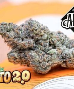 buy Jungle Boys Gelato online, buy Jungle Boys Gelato weed packs online, jungle boys, jungle boys bag, jungle boys carts, jungle boys dispensary, jungle boys extracts, jungle boys gelato, Jungle Boys Gelato for sale, Jungle Boys Gelato online, jungle boys instagram, jungle boys packaging, jungle boys seeds, jungle boys seeds for sale, jungle boys strain, jungle boys strains, jungle boys weed