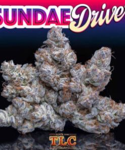 buy Jungle Boys Sundae Driver online, Buy Sundae Driver Jungleboys Online, jungle boys, jungle boys bags, jungle boys carts, jungle boys clothing, jungle boys dispensary, jungle boys extracts, jungle boys instagram, jungle boys packaging, jungle boys seeds, jungle boys seeds for sale, jungle boys strain, jungle boys strains, Jungle Boys Sundae Driver online, jungle boys wedding cake, jungle boys weed, jungle boys weed strain, Order Sundae Driver Jungleboys Online, PURCHASE SUNDAE DRIVER JUNGLEBOYS ONLINE, Real Jungleboys on Sale, Sundae Driver Jungleboys for Sale Online, Sundae Driver Jungleboys Online for Sale