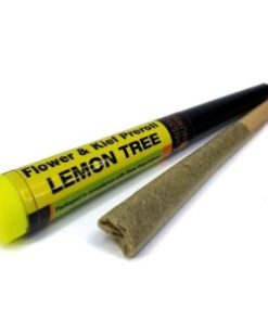 buy lemon tree space monkey meds online