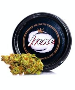 irene for Sale, irene Strain for Sale, irene West Coast Cure for Sale, Buy irene, buy irene Strain, Buy irene Strain by West Coast Cure, Buy irene Strain West Coast Cure, Buy irene West Coast Cure, buy West Coast Cure irene, buy west coast cure irene online, buy west coast cure online, Order irene Strain, Order irene West Coast Cure, order west coast cure irene, PURCHASE irene WEST COAST CURE, Shop irene West Coast Cure, west coast cure, west coast cure irene, west coast cure irene for sale, west coast cure for sale, Where to Buy irene Strain, Where to Buy irene West Coast Cure