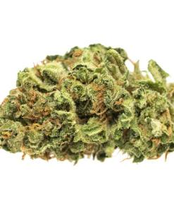 afghan kush flowering time, Afghan Kush for sale, Afghan Kush for sale on craigslists, afghan kush grow, afghan kush pictures, afghan kush price, Afghan Kush products for sale, afghan kush seeds, Afghan Kush Strain, afghan kush wiki, afghan strain, afghani strain flowering time, best online store to purchase Afghan Kush, BHO, Blackberry kush, Blue Dream, buy Afghan Kush in all 50 states, buy Afghan Kush in canada, buy Afghan Kush in texas, Buy Afghan Kush Online, buy Afghan Kush out door grow, buy Afghan Kush relaible plug, buy Afghan Kush weed online uk, buy Afghan Kush without medical card, buy edibles online reddit, buy illegal Afghan Kush online, buy legal weed online, buy marijuana online, buy medical Afghan Kush online california, buy moon rock adelaide, buy moon rock online canada, buy painkiller, Buy quality Afghan Kush for cheap, buy real marijuana online, buy real weed online, buy skunk online UK, buy synthetic weed online, buy weed online, Buying weed online, can you buy weed online, craigslist weed for sale, descreet Afghan Kush delivery, dispensaries that ship out of state, high times weed for sale, i want to buy Afghan Kush, INDICA WEED STRAINS, is it legal to buy edibles online, kush for sale, legal buds, legal weed for sale Cheap, Legal Weed For Sale Online, legal weed for sale UK, Mail order marijuana, marijuana for sale, Marijuana for sale online, most relaible site to buy Afghan Kush online, online dispensary shipping, online store Afghan Kush, Order Afghan Kush Online, Order Weed Online, RelaxedTags: 420 mail order, synthetic Afghan Kush for sale, weed buds for sale Online, weed buds for sale UK, weed for sale, weed for sale AU, weed for sale online, weed for sale onlinereal weed for sale, weed online for sale, where is the most secured site to buy Afghan Kush online, where to buy Afghan Kush in sydney
