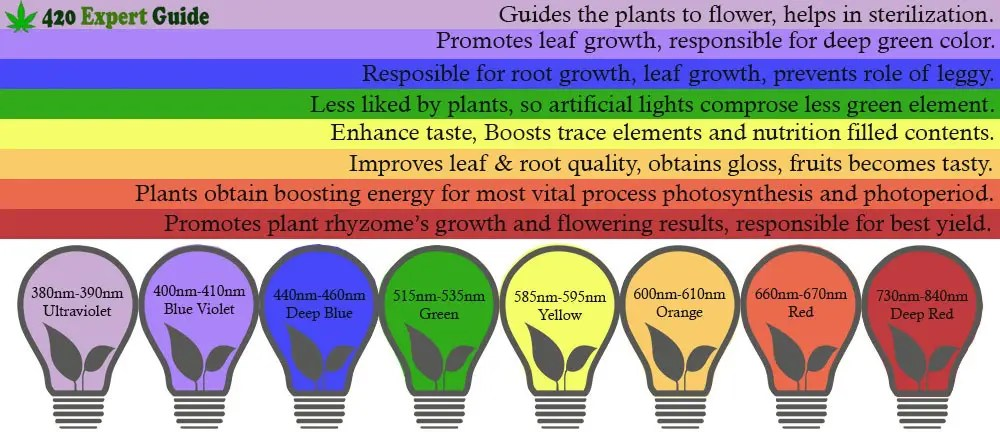 Can you use any led lights to grow plants