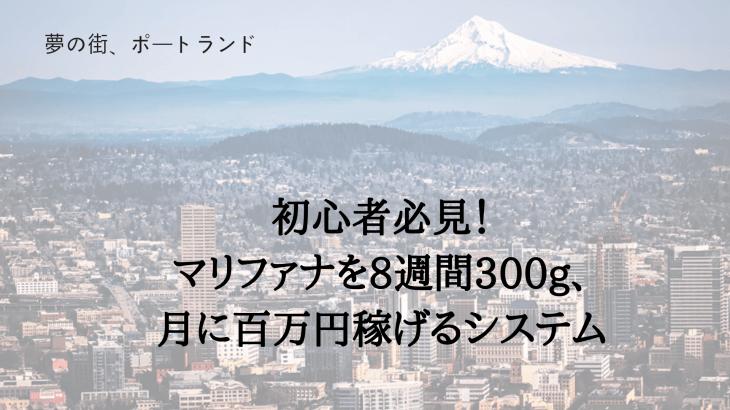 初心者必見!葉っぱを8週間300g、月に百万円稼げるシステム