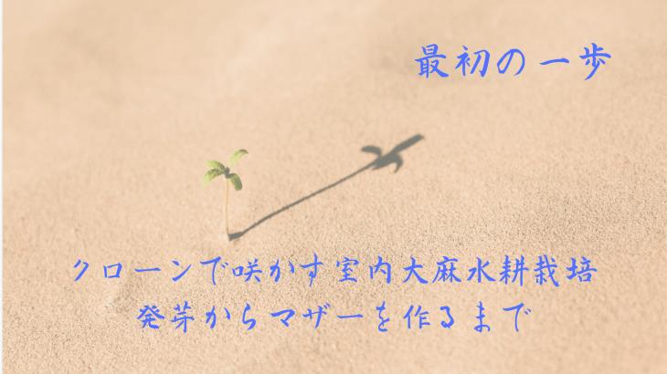 最初の一歩 ! クローンで咲かす室内大麻水耕栽培 発芽からマザーを作るまで