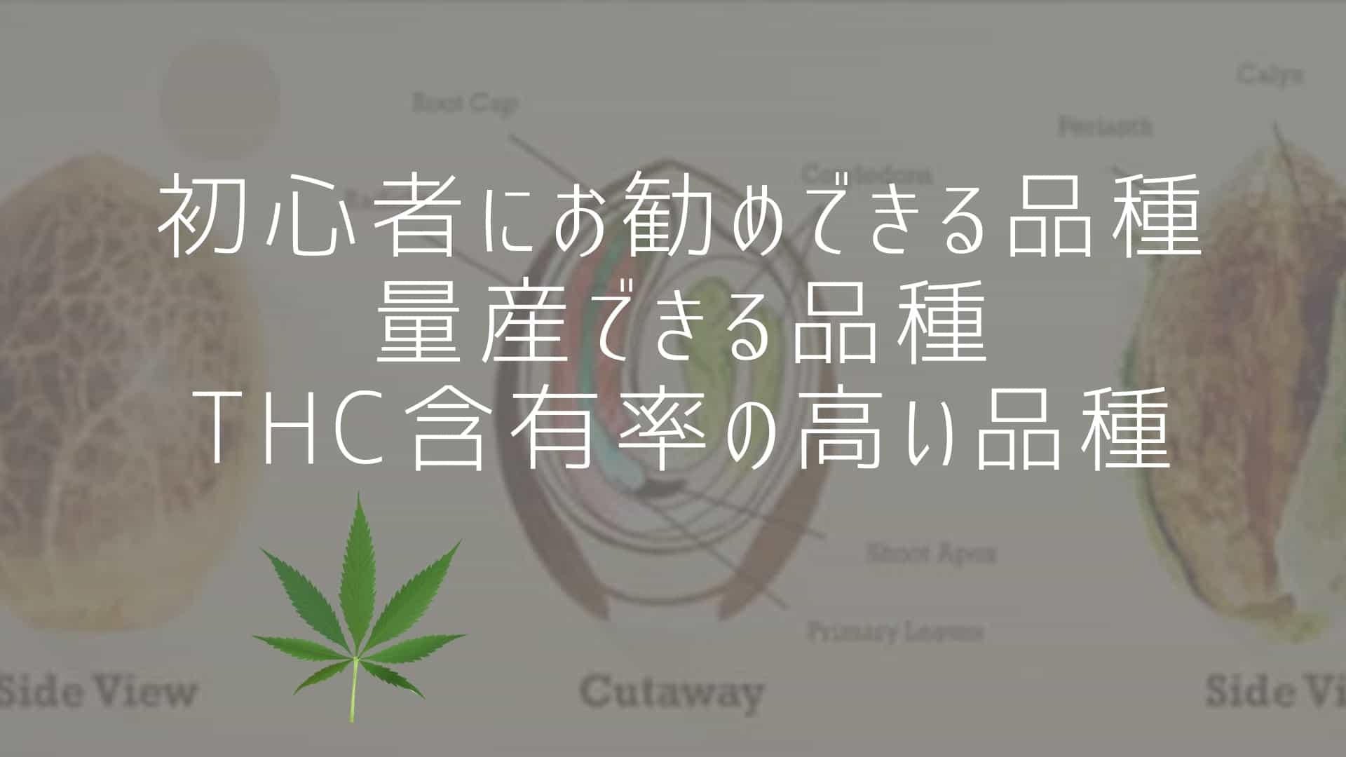 初心者にお勧めできる品種、量産できる品種、THC含有率の高い品種
