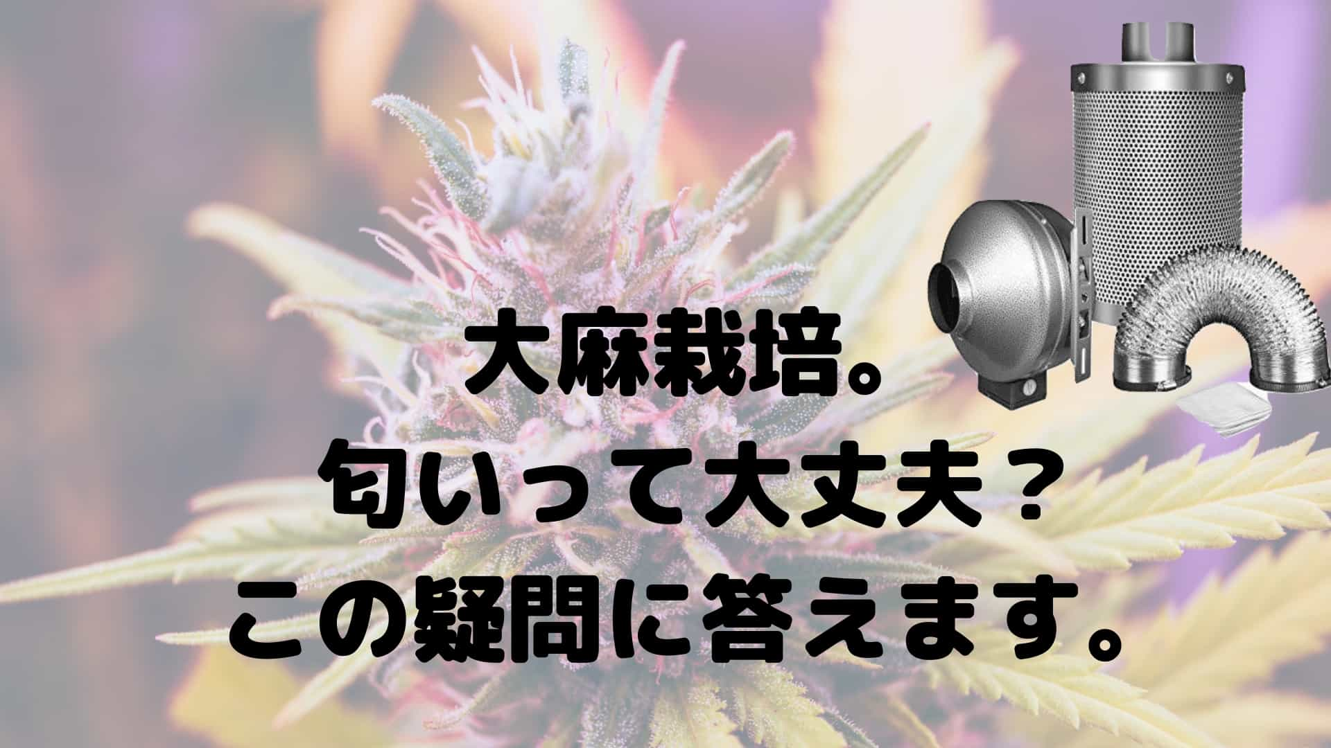 大麻栽培。 匂いって大丈夫? この疑問に答えます。