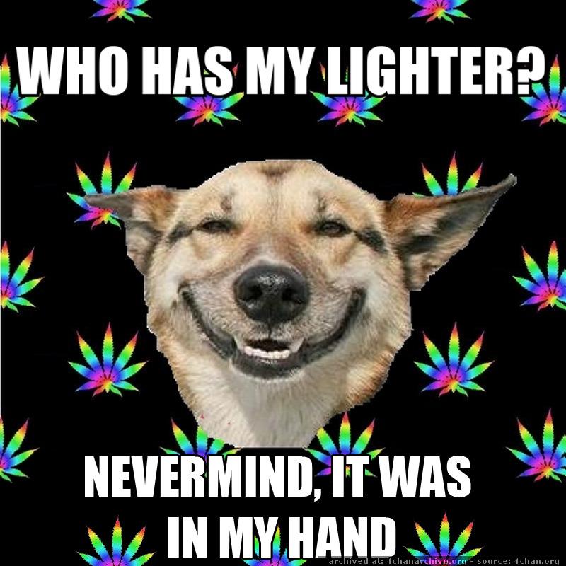 Potweiler Stoner Dog Meme  Weed Memes