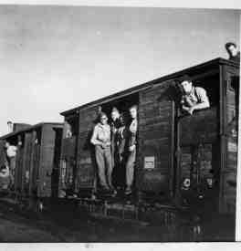 331 Wing Train