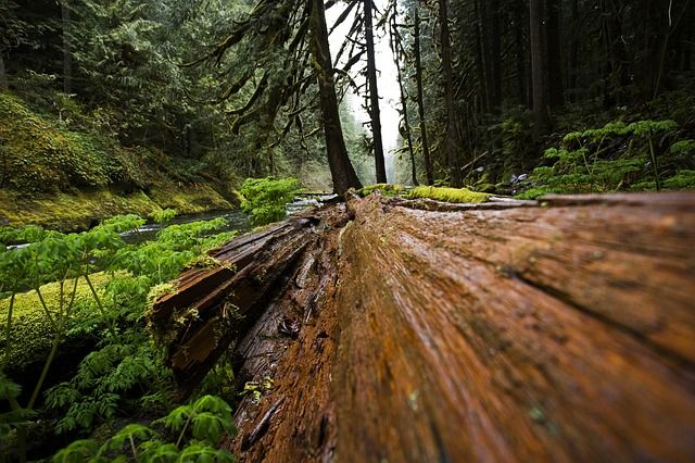 Image result for tree falls in woods public domain image