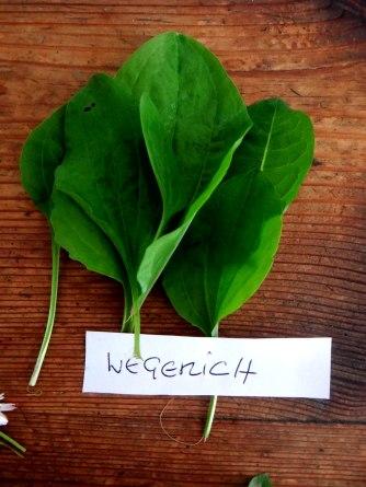 Grüne Soße aus Wildkräutern,Pellkartoffeln,Joghurtspeise mit Waldhe3idelbeeren (13)
