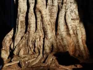 tree-log-tribe-large-53172
