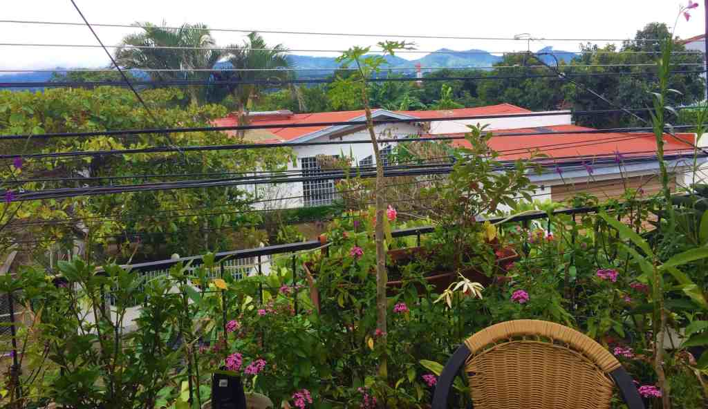 View from the balcony of the roach hotel. Beautiful flowers, wires everywhere!
