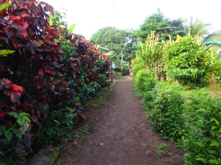 Path in Tortuguero