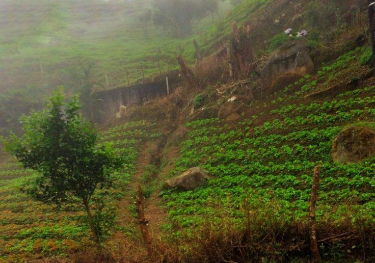 steep mountain side farms