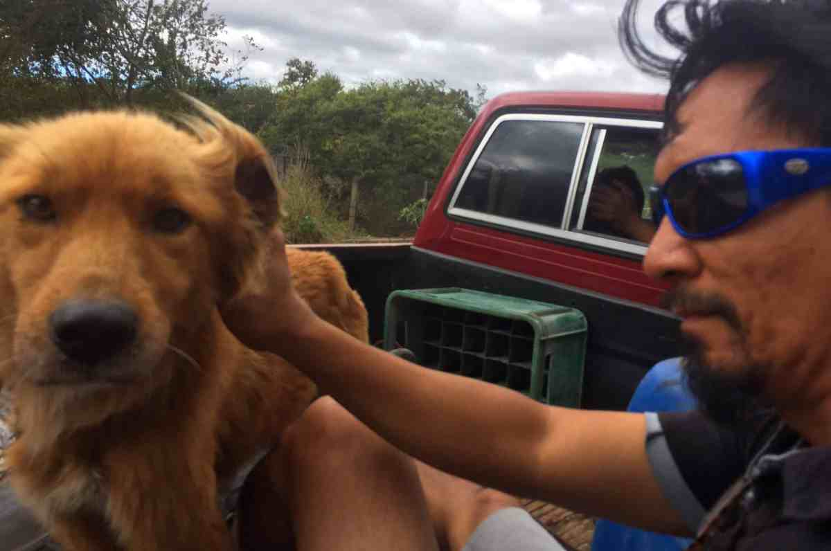 Hitching a ride with a friendly dog