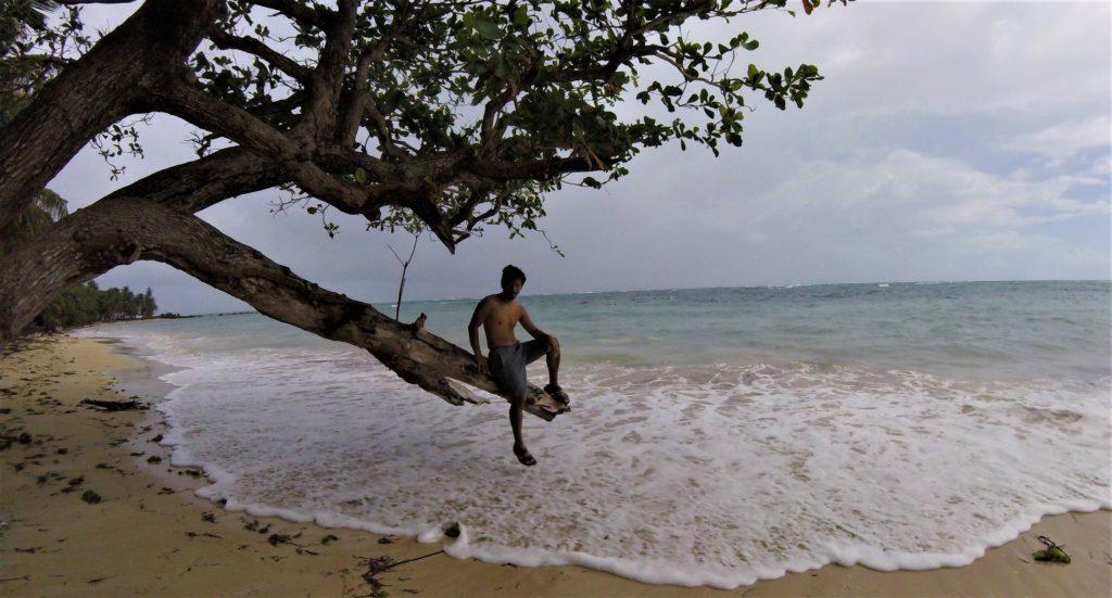 Trin in a tree on the beach of corn island