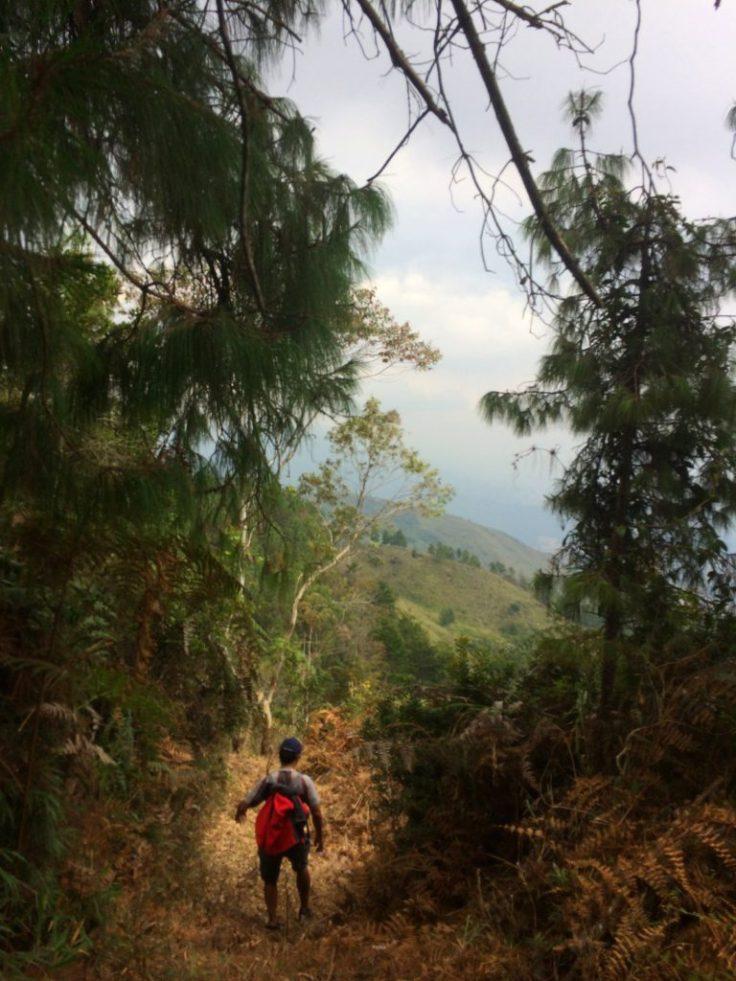Path in Arvi Park