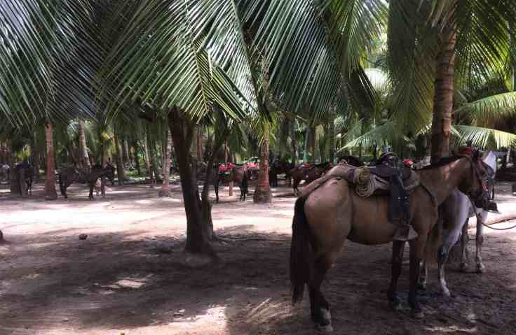 horses in Tayrona National Park north of Cartagena, Colombia