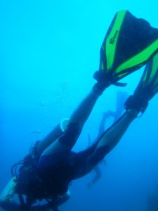 Diving in Cobia