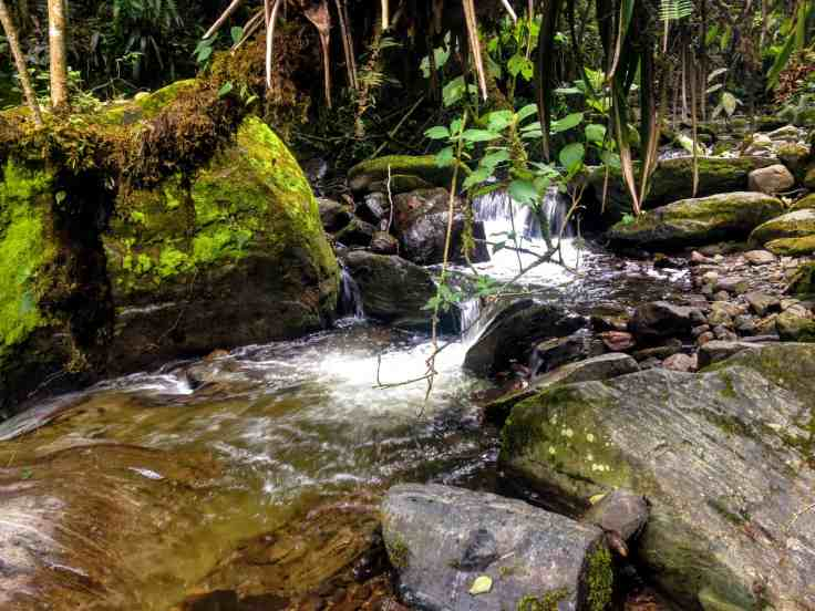 river in the Cocora Valley of beautiful Colombia