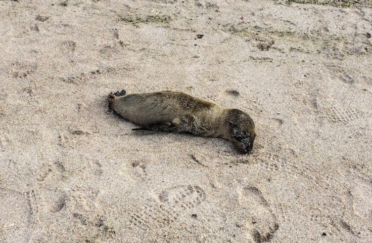 Rejected baby sea lion