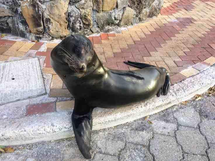 Sea Lion owning the sidewalk