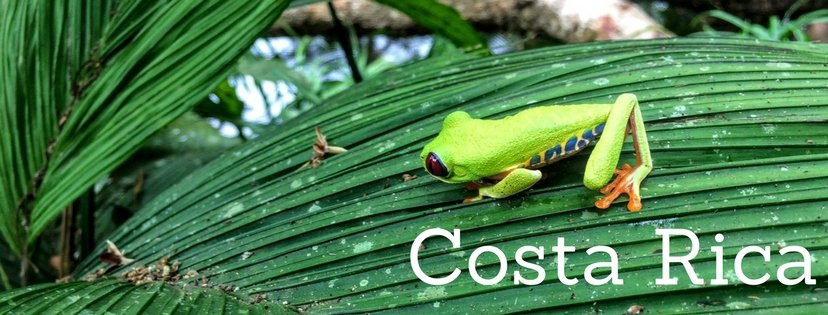 Tree frog on costa rica banner