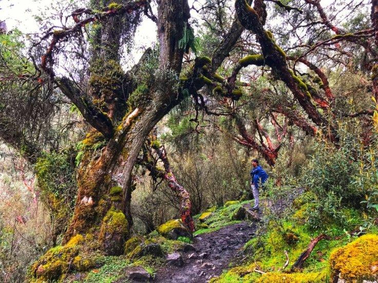 Wooded area along the valley of the Santa Cruz Trek