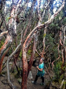 Forest of Cajas National Park things to do in Ecuador