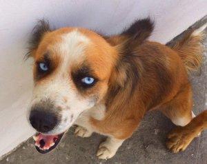 Princessa the adopted street dog