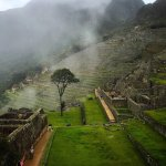 THE INCAS PLANTED WATER