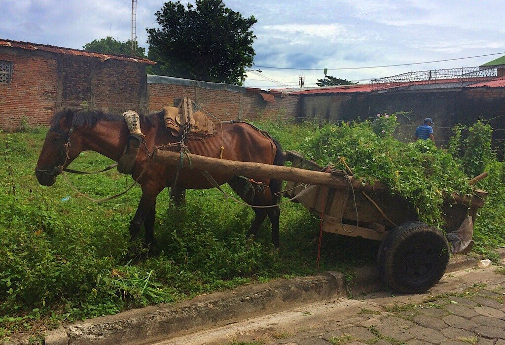 Starving horse