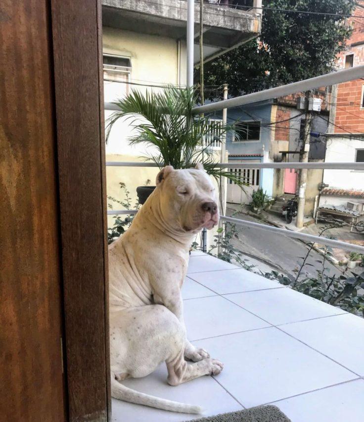 Argos by our front door