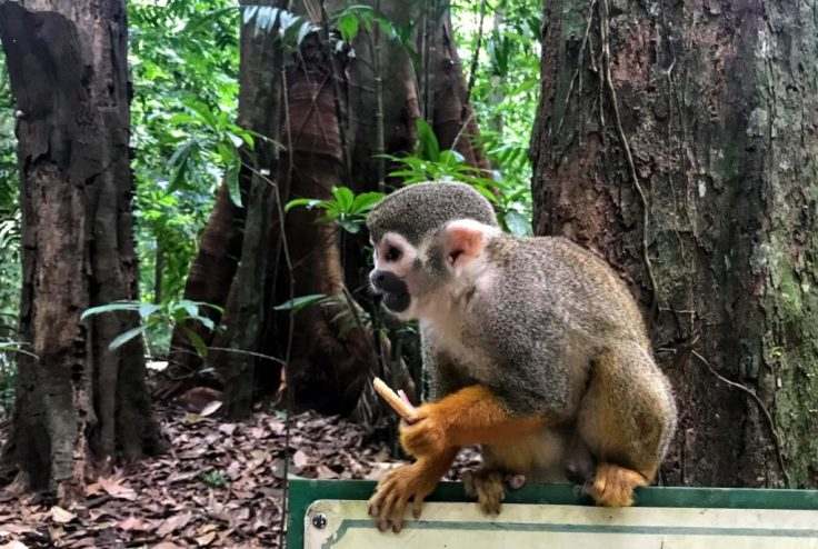 Monkey with a stolen cookie, travel safety tips.