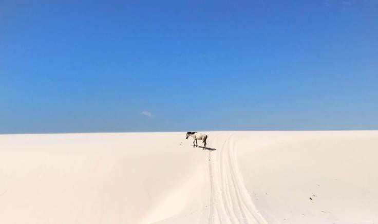 Lençóis Maranhenses National Park the Most beautiful place in the world and a horse