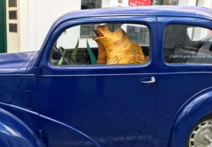 Fish driving a car