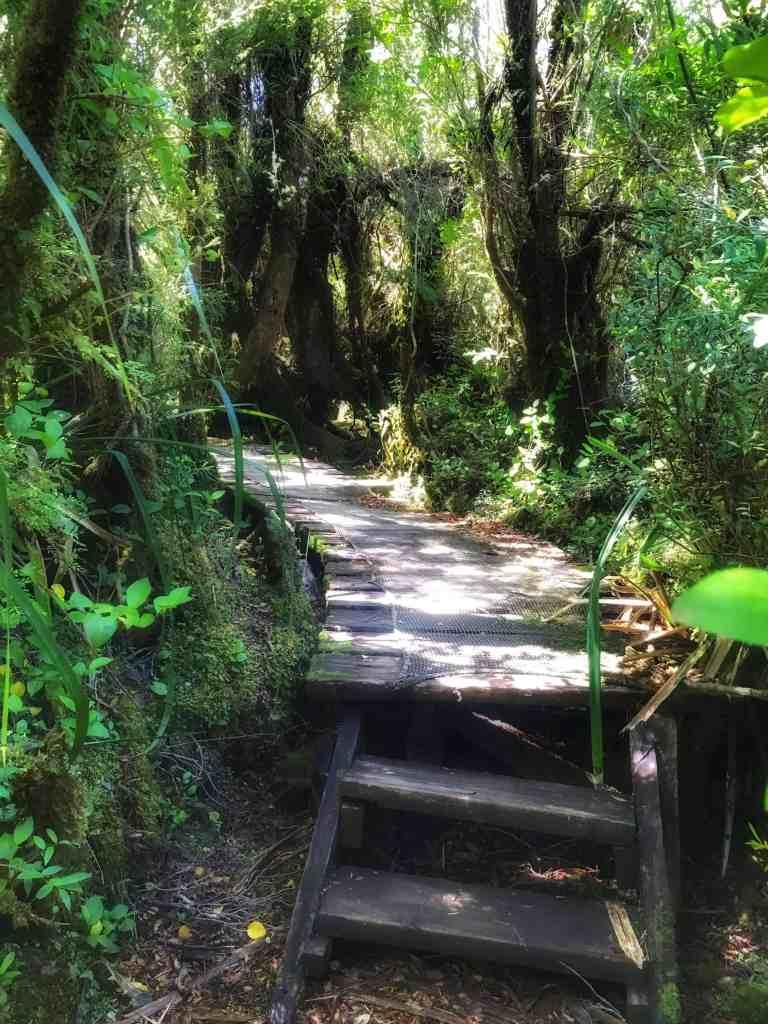 Valdivian temperate rain forest on Chiloe Chile