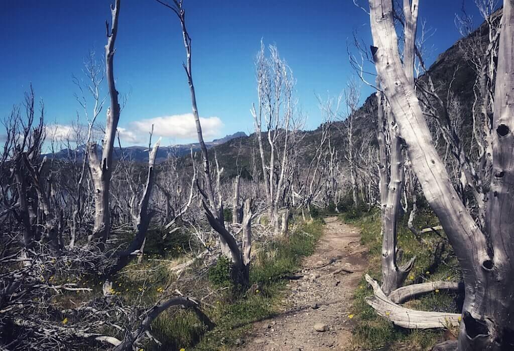 Burned area along the Torres del Paine W Trek