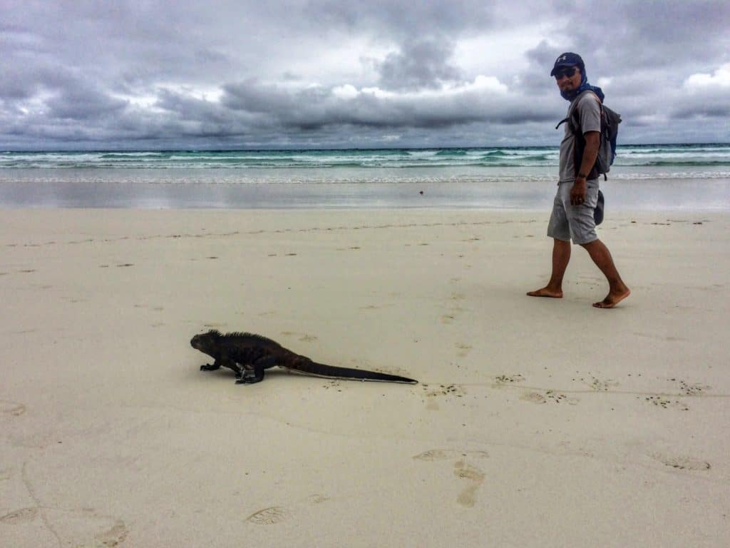 Trin with a marine iguana on a beach in Galapagos