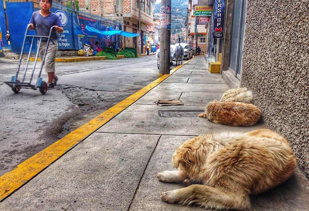 Street dogs sleeping