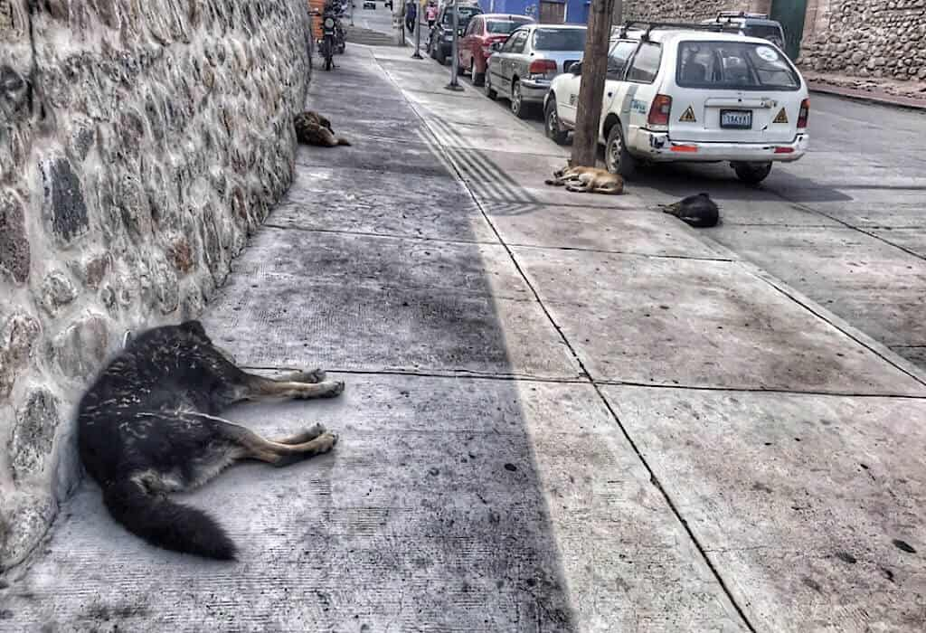 sleeping street dogs
