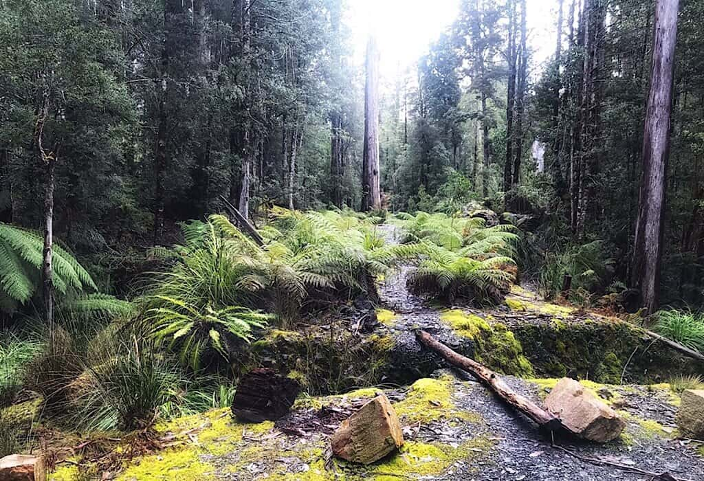 The three sisters track in the Tasmania Wilderness