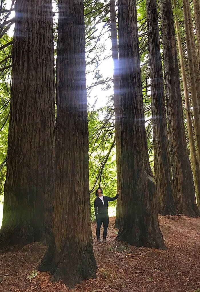 Trin standing next to a California Redwood tree along the inner edge of the forest, Otway NP, Victoria, Australia