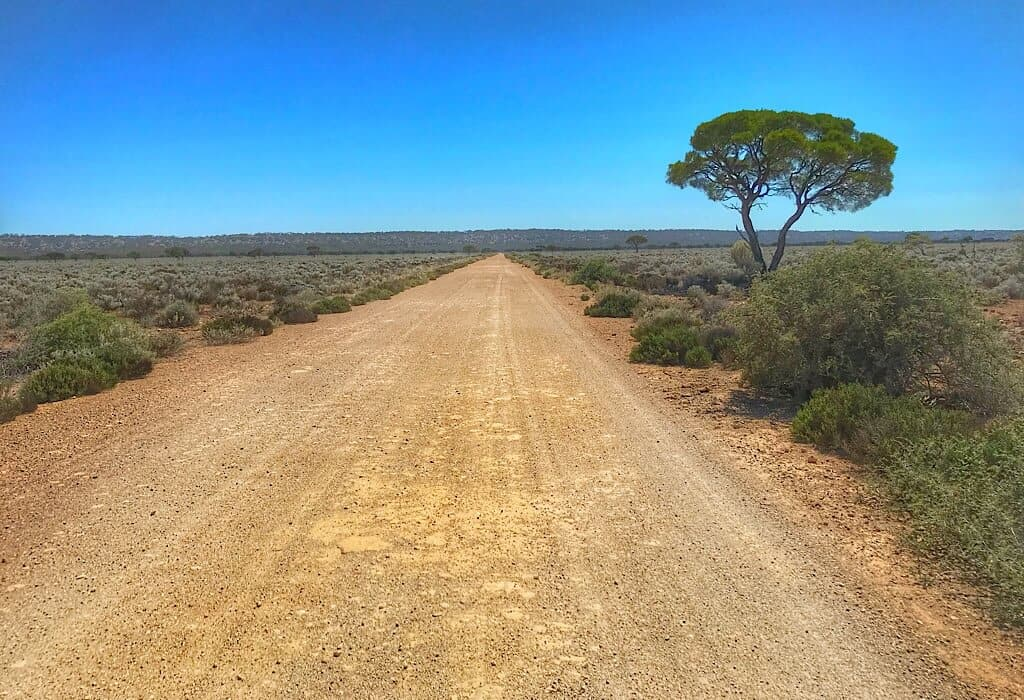 A loan tree on a dirt trek in the Nullarbor