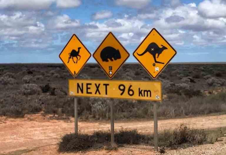 Road sign warning of camels, wombats, and kangaroo