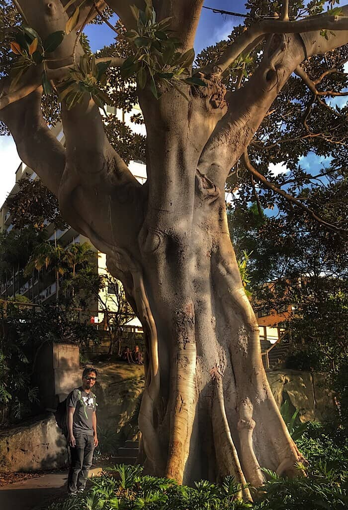 Cool tree near Sydney Australia