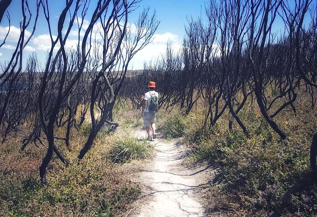 A trail recovering from a recent burn in Tathra, New South Wales, Australia