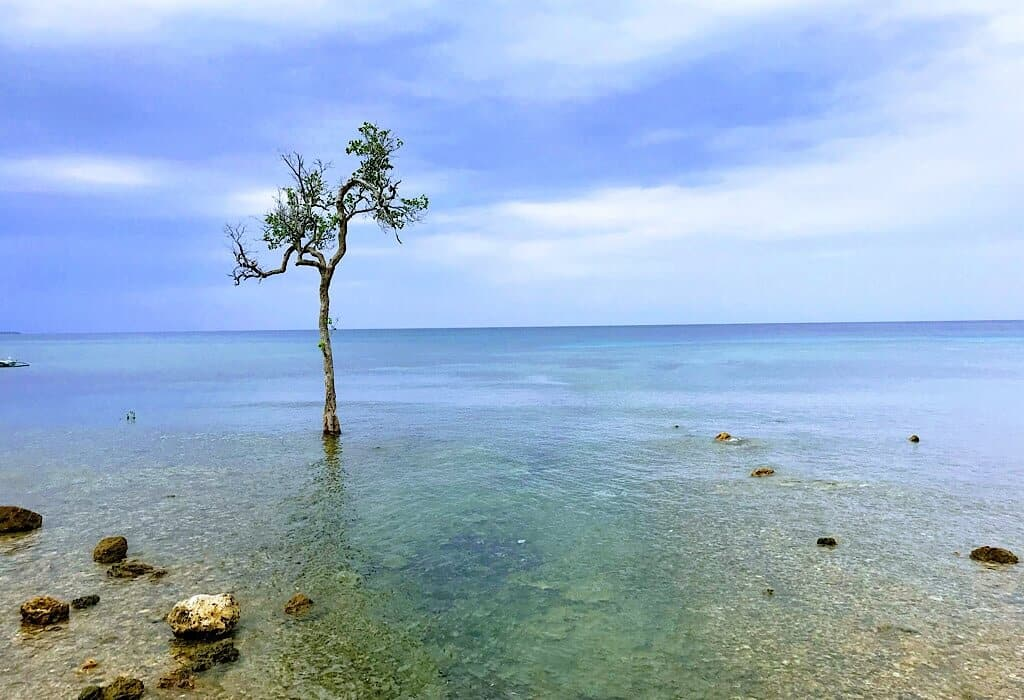 A single tree in the water on a beach in Siquijor.