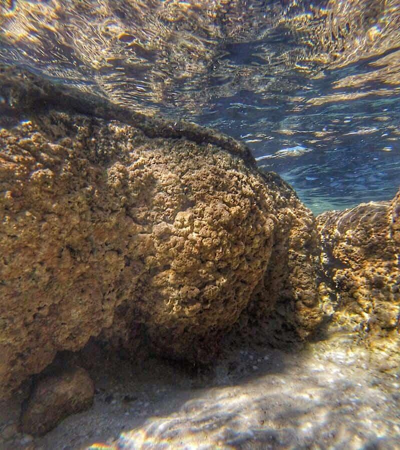Underwater photo of a Stromatolite in Hamlin Pool of Western Australia